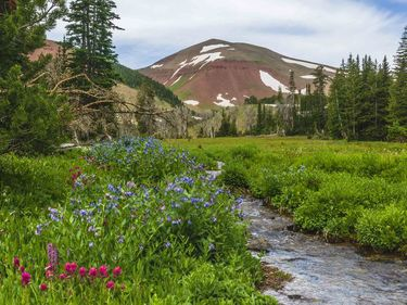 Wildflowers in the Wyoming Range. Photo by Dave Bell.